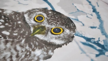 Snoozing Snowy Owl test